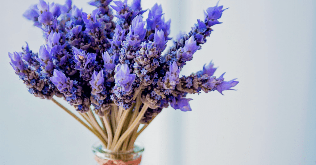 Health benefits of lavender and uses