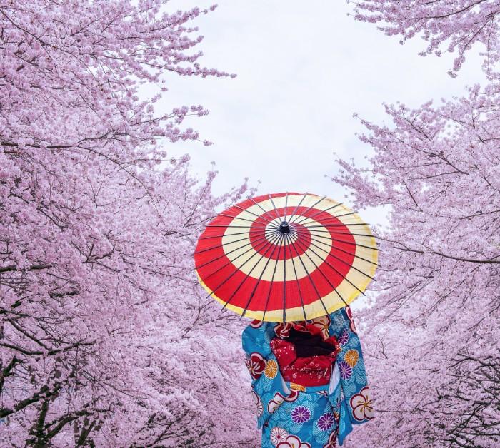 Ikigai the secret for longevity