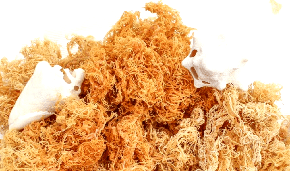 How to use sea moss, benefits and side effects