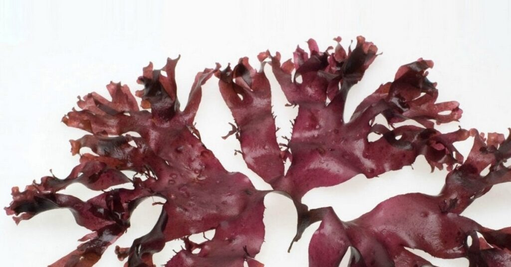 Health benefits of Dulse Seaweed