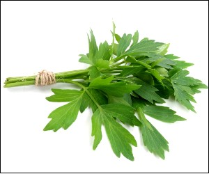 Lovage herb for Sirt Diet