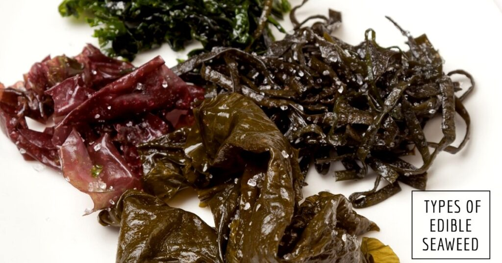 Different types of edible seaweed