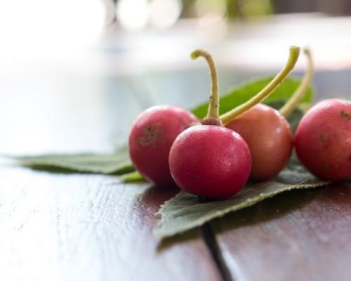 Aratilis fruit