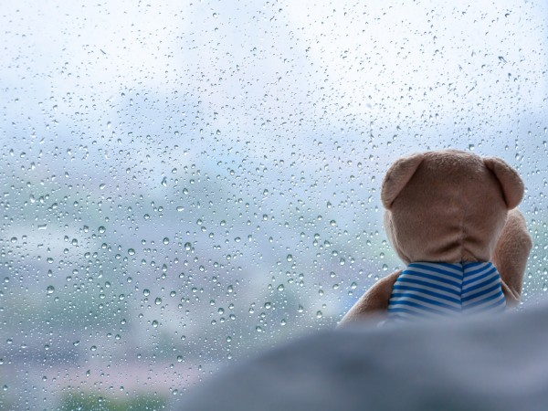 Lonely bear looking of the window