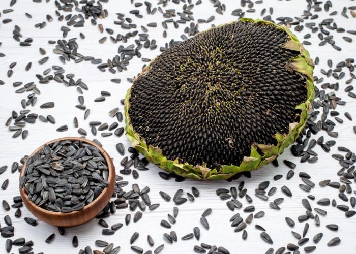 Sunflower seeds on a sunflower fruit